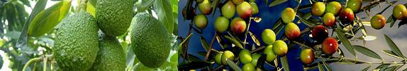Aperoliva - Venta de aceite de oliva a Granel.